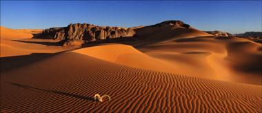 Пустыня - недостаток влаги